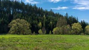 Lasu krajobraz, natura Elb piaskowa góry Zdjęcie Stock