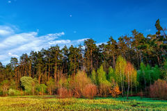 Lasu krajobraz pod wieczór niebem z chmurami w świetle słonecznym Obraz Royalty Free