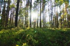 Lasu krajobraz w letnim dniu Zdjęcie Royalty Free