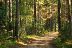 Lasu krajobraz w letnim dniu Fotografia Stock