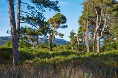 Lasu krajobraz w Nowa Zelandia Obraz Stock