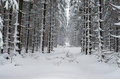 Lasu krajobraz w zimie Fotografia Stock