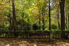Lasu krajobraz z drzewami i ławka w Retiro parku Madryt, Zdjęcie Royalty Free