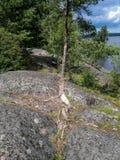 Lasu krajobraz z Dużymi kamieniami na brzeg zatoka obrazy royalty free