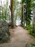 Lasu krajobraz z Dużymi starymi kamieniami zdjęcia royalty free