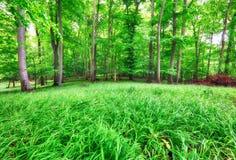 Lasu krajobraz z zieloną trawą i drewnami przy wiosną fotografia stock