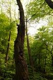 lasu krajobrazowa natury wiosna obrazy stock