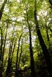 lasu krajobrazowa natury wiosna zdjęcia stock