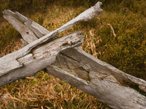Lasu krzyż Obraz Royalty Free
