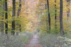 lasu ślad Obrazy Stock