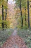 lasu ślad Fotografia Royalty Free