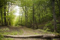 lasu ślad Zdjęcie Royalty Free