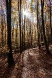 Lasu ślad w jesieni obraz royalty free