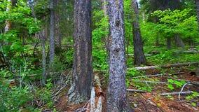 Lasu lodowa Krajobrazowy park narodowy zdjęcie wideo