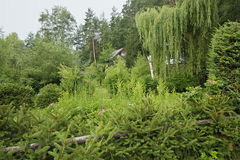 Lasu ogród Obrazy Royalty Free