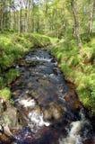 lasu parka strumień szeroki Zdjęcia Royalty Free