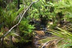 lasu podeszczowy bieg strumień Obrazy Royalty Free