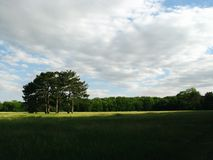 Lasu pola krajobraz zdjęcia royalty free