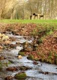 Lasu spaceru rzeka i pykniczny teren obraz stock