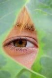 lasu strażowa natury ochrona Zdjęcia Royalty Free