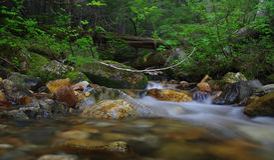 Lasu strumień zdjęcie stock