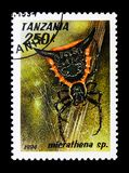 Lasu tkacza Micrathena sp , pajęczaka seria około 1994, obraz stock