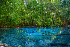 Lasu tropikalnego park narodowy w Sra Morakot, krabi Thailand Obrazy Stock