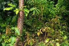 lasu tropikalny podeszczowy Zdjęcie Royalty Free