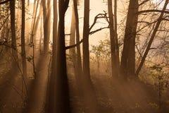 Lasu światło Fotografia Royalty Free