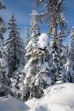 lasu zakrywający śnieg Zdjęcia Royalty Free