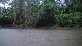 LaSuerte flod stock video