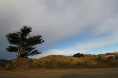 Laswson的着陆Tomales加利福尼亚 库存图片