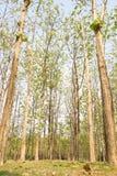 lasy Obrazy Stock