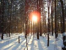 lasy zdjęcie stock