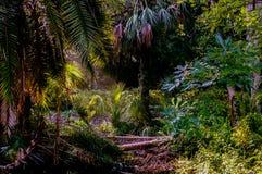 lasy deszczowe Zdjęcia Stock