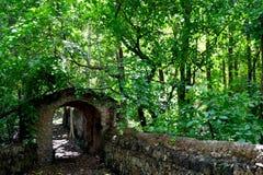 lasy deszczowe Obraz Royalty Free