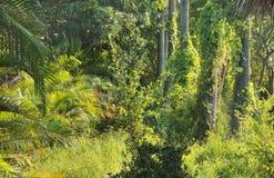 lasy deszczowe Fotografia Royalty Free