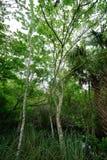 lasy deszczowe Obraz Stock