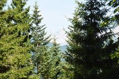 Lasy Dolomiti góry Fotografia Royalty Free