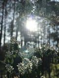 Lasy genialna pogodna wiosny scena w lasach Kyiv, UKRAINA - zdjęcia stock