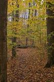 lasy jesienią Zdjęcia Royalty Free