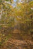 lasy jesienią Fotografia Royalty Free