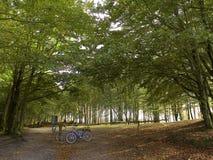 lasy jesienią Obrazy Royalty Free