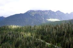 Lasy na Mt. Piekarzie obraz royalty free