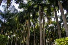 lasy tropikalni obrazy stock