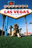 lasy Vegas Zdjęcia Stock