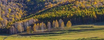 Lasy w zmierzchu, Xingcheng miasto, Chiny Obraz Royalty Free