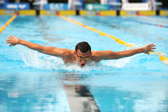 Laszlo Cseh. MILAN, ITALY - SEPT 21: Laszlo Cseh swimming champion during the performance september 21, 2008 in Milan, ITALY Royalty Free Stock Photography