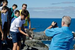 Laszowanie cory ` s shearwater fotografia royalty free