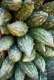 Lat amer de melon Charantia de Momordica Photos libres de droits